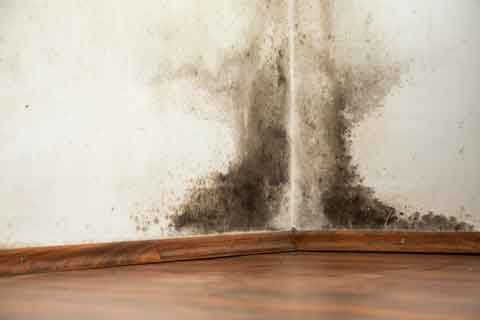 ATEZ Mold Removal